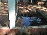 Visita al Zoologico 3