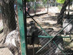 Visita al Zoologico 32