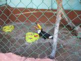 Visita al Zoologico 39
