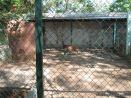 Visita al Zoologico 52