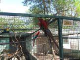 Visita al Zoologico 7