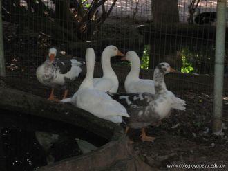 Corrientes Loro Park 20
