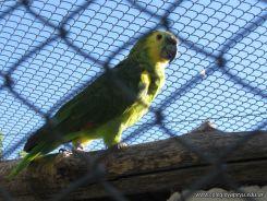 Corrientes Loro Park 33