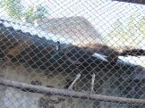 Corrientes Loro Park 4