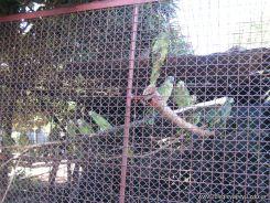 Corrientes Loro Park 54