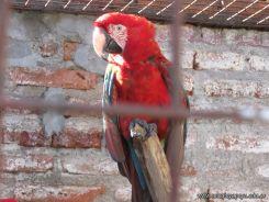 Corrientes Loro Park 71