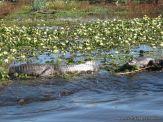 Viaje a los Esteros del Ibera 2010 111