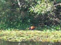 Viaje a los Esteros del Ibera 2010 116