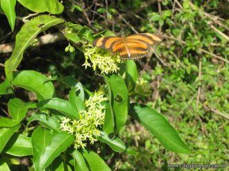 Viaje a los Esteros del Ibera 2010 54