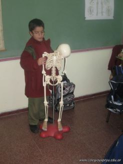 Sistema Osteoartromuscular 16