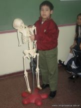 Sistema Osteoartromuscular 22
