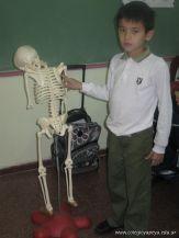 Sistema Osteoartromuscular 23