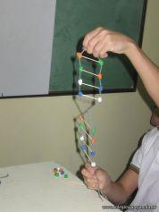 Estructura Espacial del ADN 52