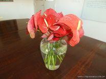 Flores Mori 1