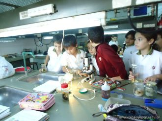 Observacion en Microscopio 1