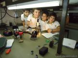 Observacion en Microscopio 4