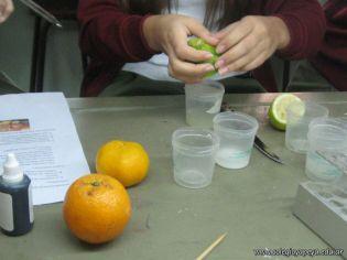 Presencia de Vitamina C 17