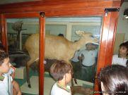 Visita al Museo de Ciencias Naturales 37