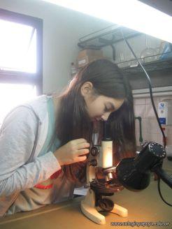 Observando por el Microscopio 13