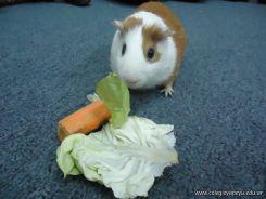 Preparativos y Festejos por el Dia del Animal 109