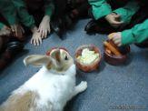 Preparativos y Festejos por el Dia del Animal 82