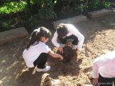 1er grado Trabajando en la Huerta 4