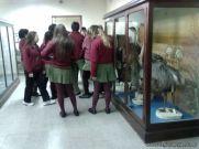 Visita al Museo de Ciencias Naturales 4