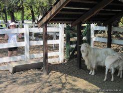 Visita a la Granja La Ilusion 2011 187