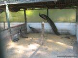 Visita a la Granja La Ilusion 2011 322