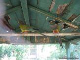 Visita a la Granja La Ilusion 2011 326