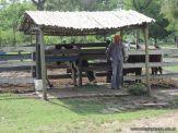 Visita a la Granja La Ilusion 2011 50