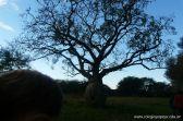 Visita a la Granja La Pituca 5