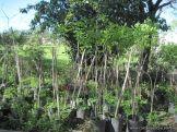 Visita al Jardin Botanico 26