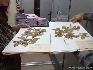 Determinacion taxonomica de una planta de mandarina 13