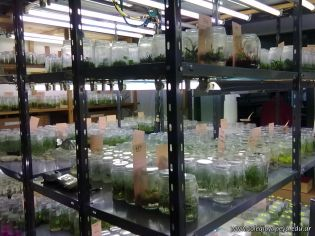 Visitamos la Catedra de Fisiologia Vegetal 9
