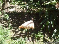 Visita al Zoologico de Salas de 3 33