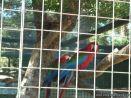 Visita al Zoologico de Salas de 3 39