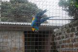 Visita al Corrientes Loro Park 12