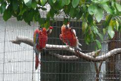 Visita al Corrientes Loro Park 16