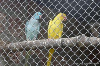 Visita al Corrientes Loro Park 6