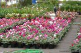Visita a la Escuela de Jardineria Nro. 13 8