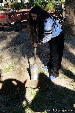 Dia del Arbol 2013 39