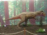 Dinosaurios en Salas de 5 39