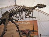 Primaria visito el Mundo Jurasico 32