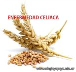 Extraccion del Gluten 1