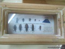 Mal de Chagas 1