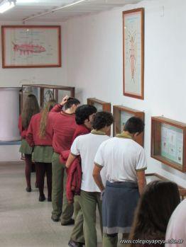 Visita al Museo de Ciencias Naturales Amado Bompland 10