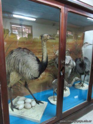Visita al Museo de Ciencias Naturales Amado Bompland 4