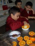 Jugo de Naranjas en Salas de 5 5