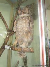 Visita al Museo de Ciencias Naturales 70